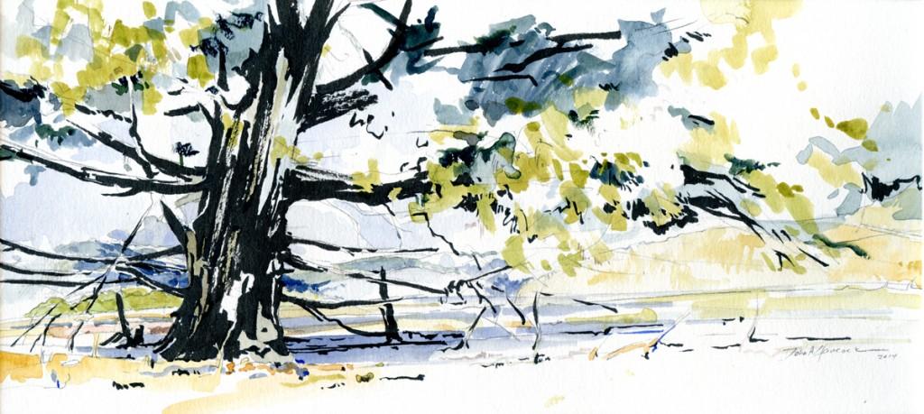 Hilltop Pine, Across From Rockfish Gap WEB